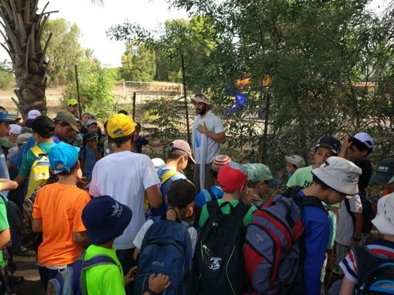 קייטנות מהגולן מתנדבות בשביל סובב כינרת